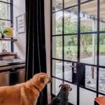 MW House Noordehoek Dogs1 Metal Kitchen Windows
