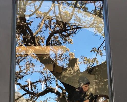 scar hair - Window View Tree Outside - Metal Windows